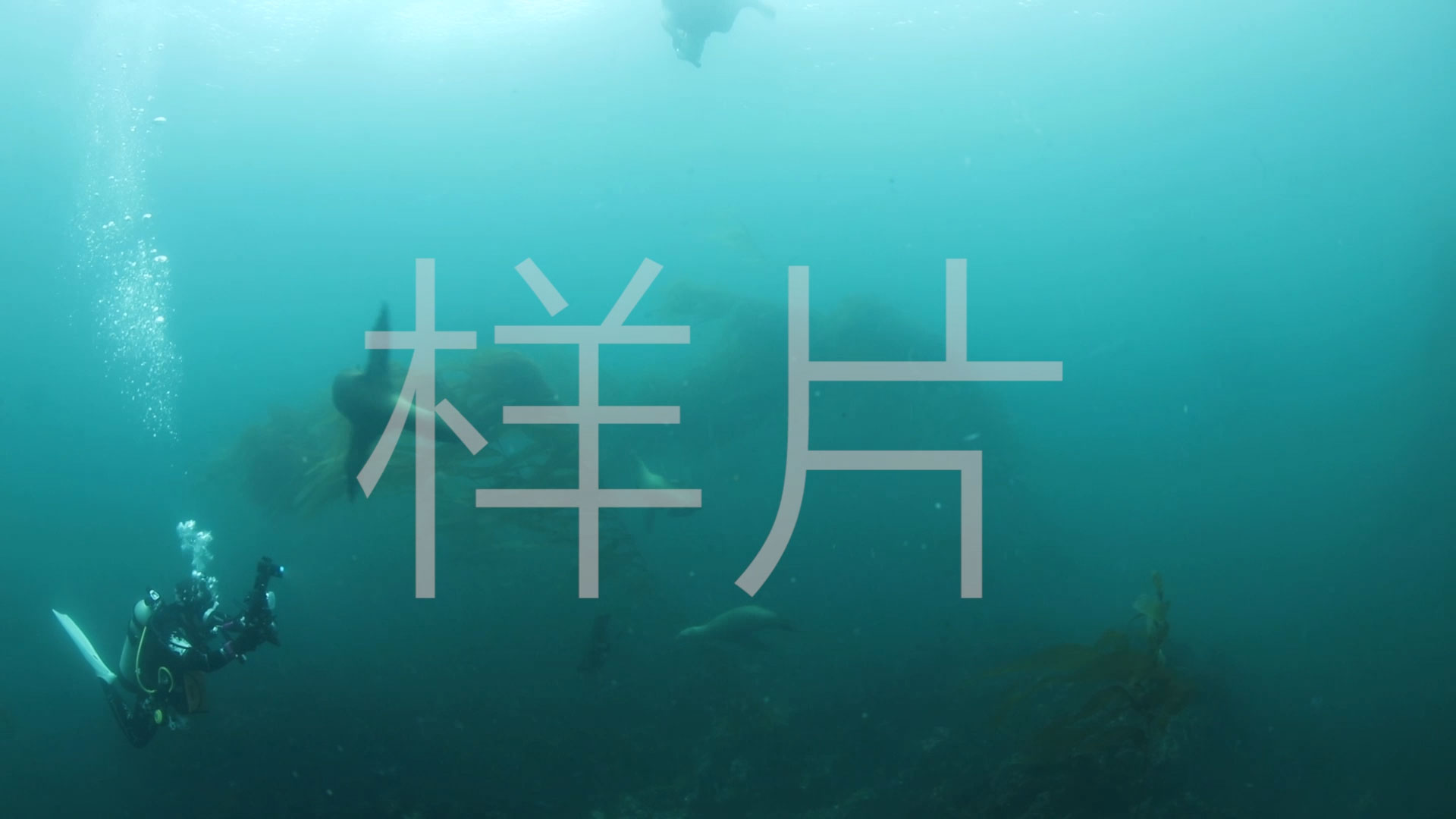 海狮调戏潜水员
