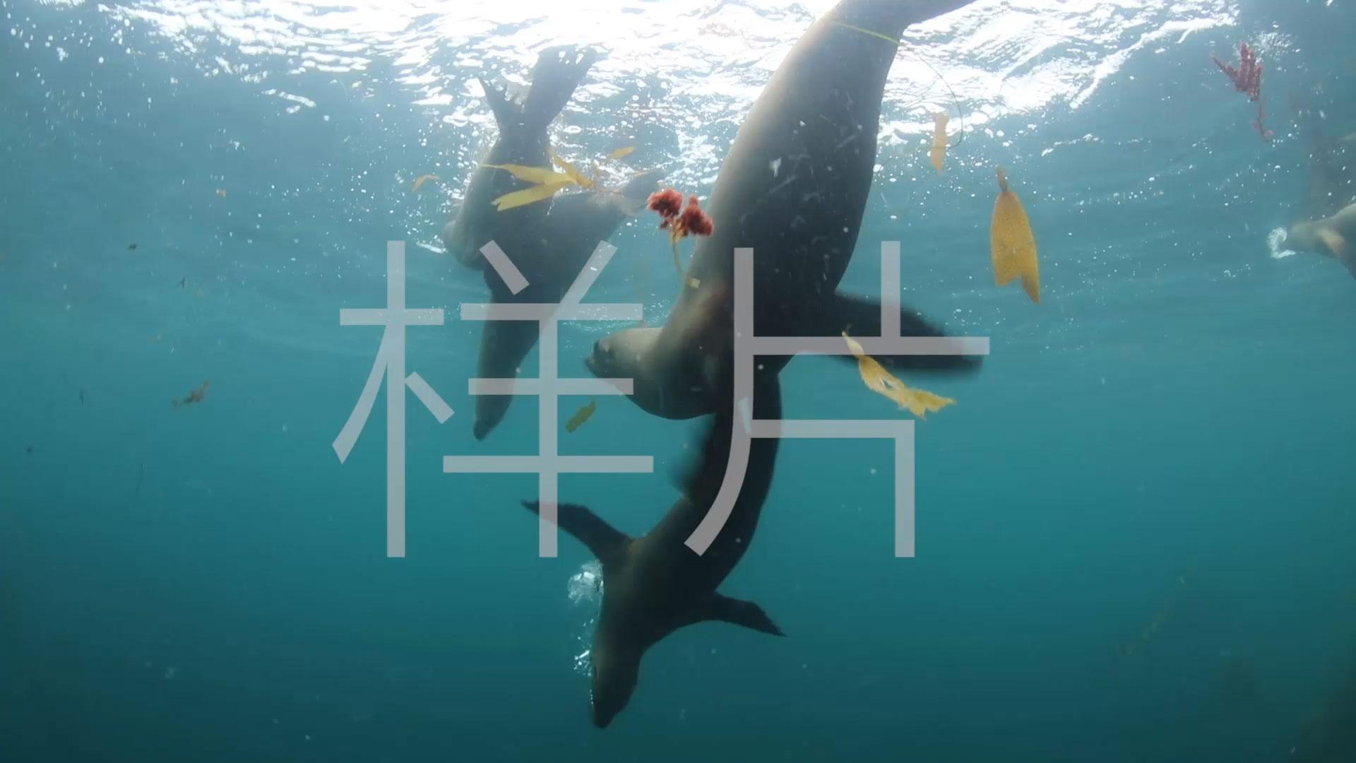 海狮群嬉戏