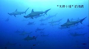 """加拉帕戈斯群岛(上) """"大惊小怪""""的海底"""