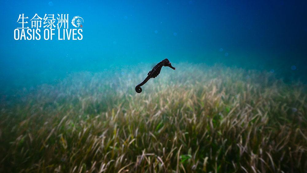 水下中国 : 第5集 生命绿洲