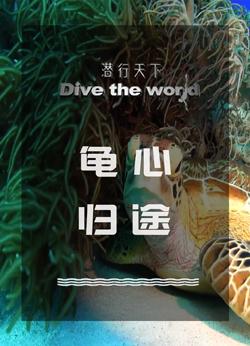 潜行天下纪录片 第二季:马来西亚山打根海龟岛,探寻海龟生命的起源